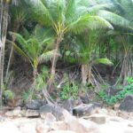 Пляж Банана фото номер 14