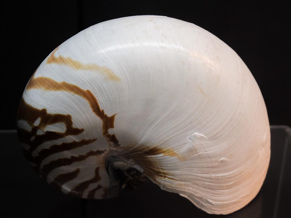 Музей морских раковин Пхукет