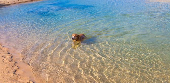 Заводь на пляже Найхарн