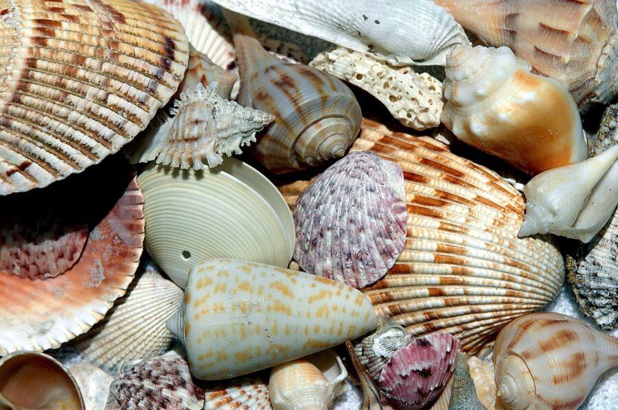 Ракушки и кораллы нельзя вывозить из Таиланда